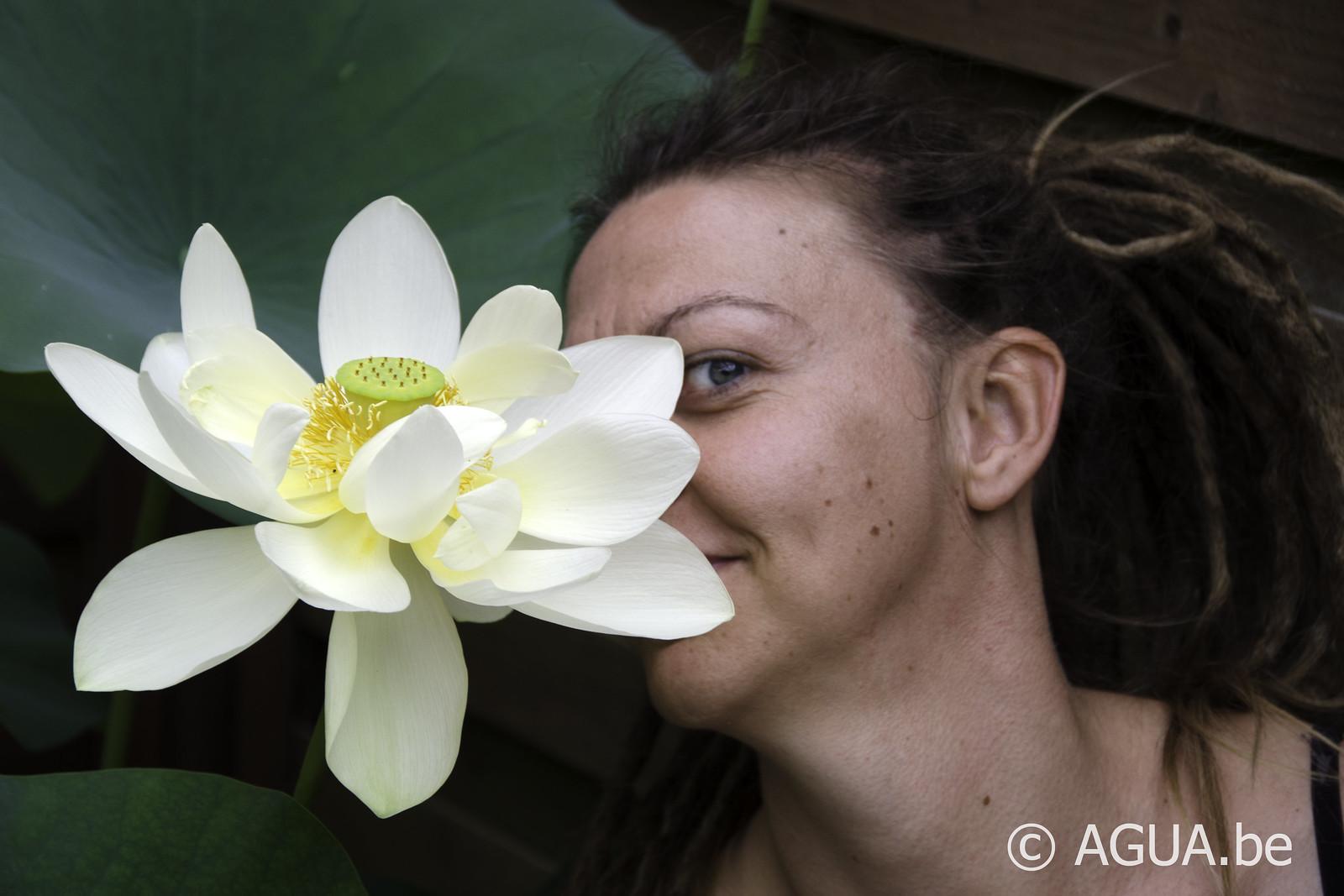 Lotus: 4 seizoenen