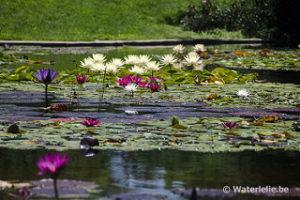 Pond San Diego